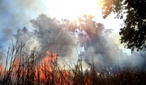 """""""El humo se jacta con el aire, y la ceniza con la tierra, de ser hermanos del fuego"""" (Rabindranath Tagore)."""