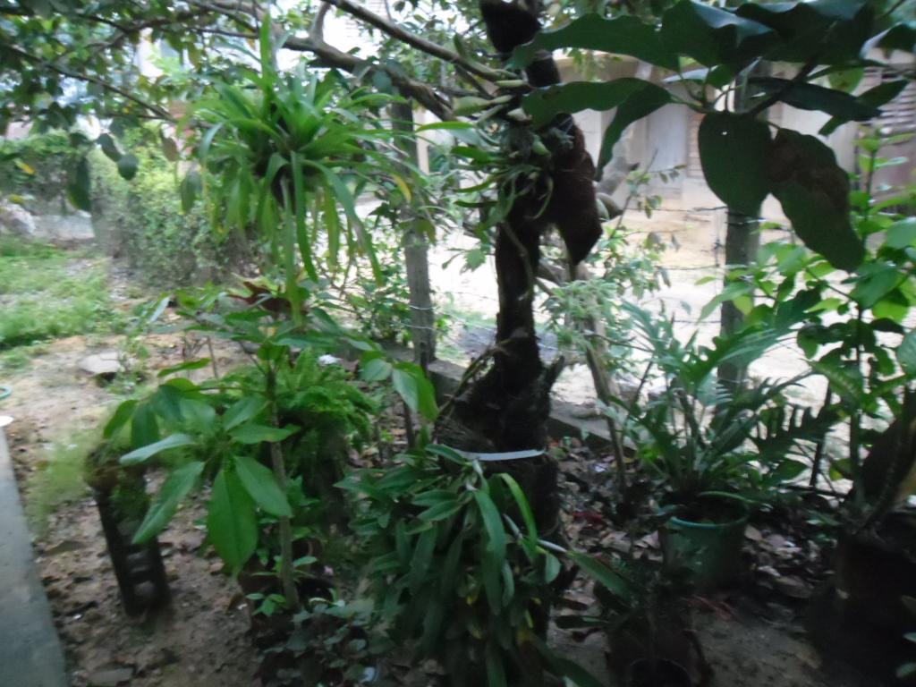 Mi casa es un oasis oasis de isa for Algunas plantas ornamentales
