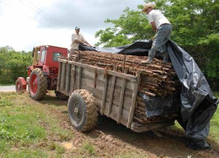 Foto tomada de Cubasí donde se ven los campesinos sacando la madera q después será usada para arreglar las viviendas afectadas por las lluvias
