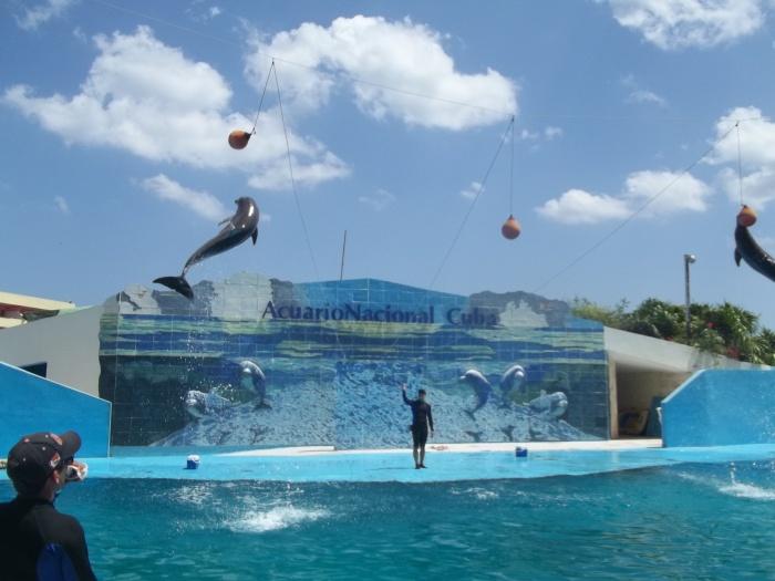 Los delfines son el principal atractivo para niños y adultos