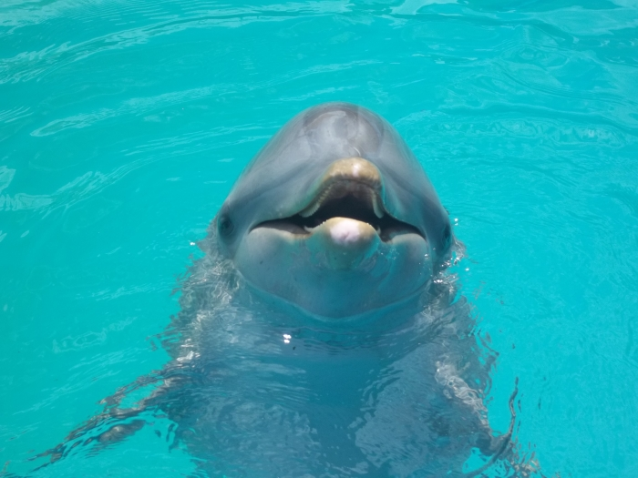 Los delfines tienen una belleza increíble, este nos regala una sonrisa