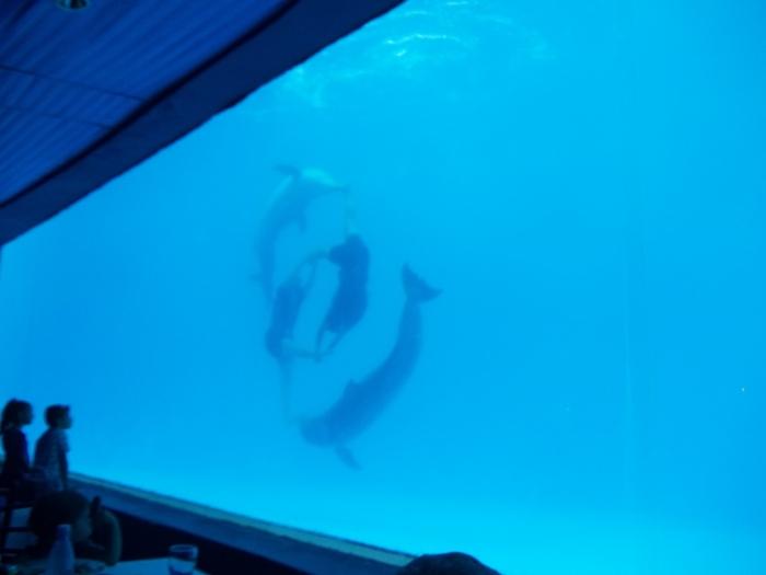 Espectáculo subacuático en el Acuario Nacional