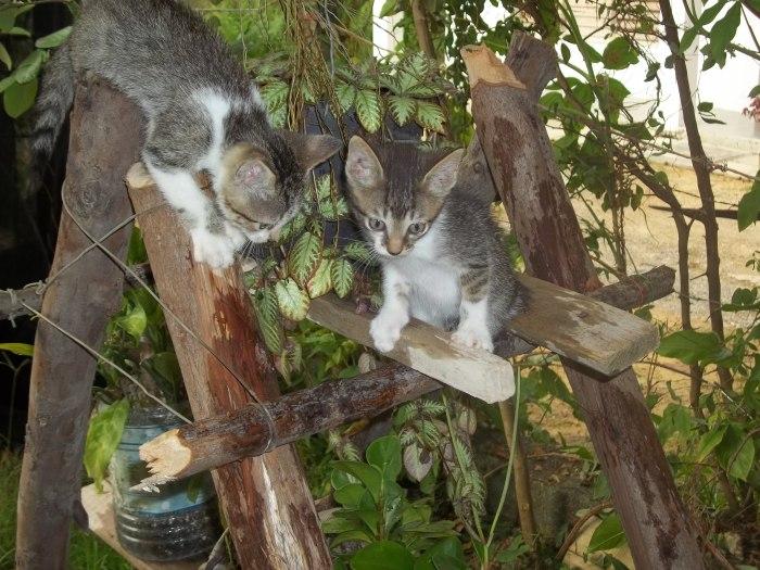 Son muy traviesos esos gaticos