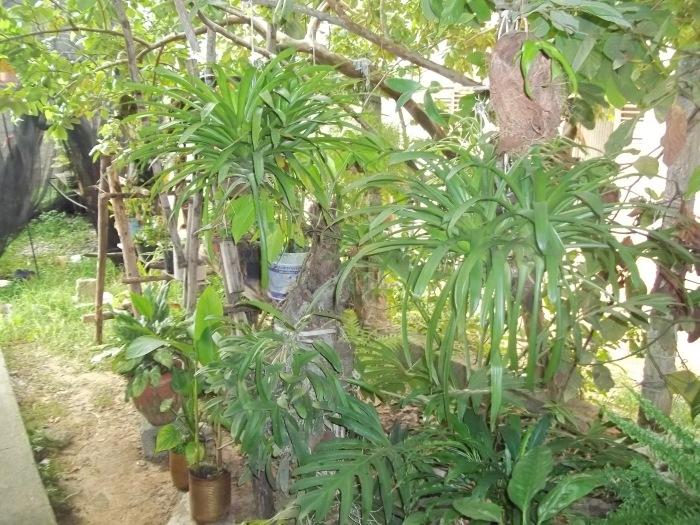 Plantas de diferentes tipos adornan mi patio