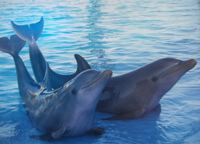 Los delfines con su belleza indescriptible