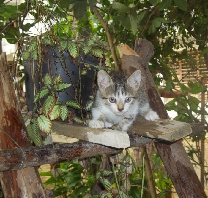 El gatico vive tranquilo en mi patio