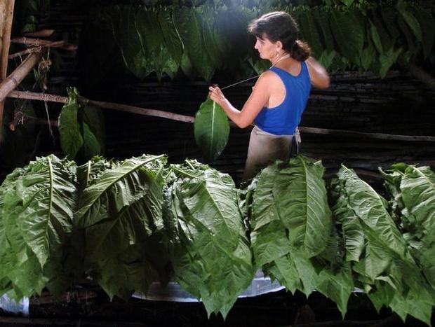 ensartadora de tabaco en cooperativa Tomás León en Río Seco, San Juan y Martínez