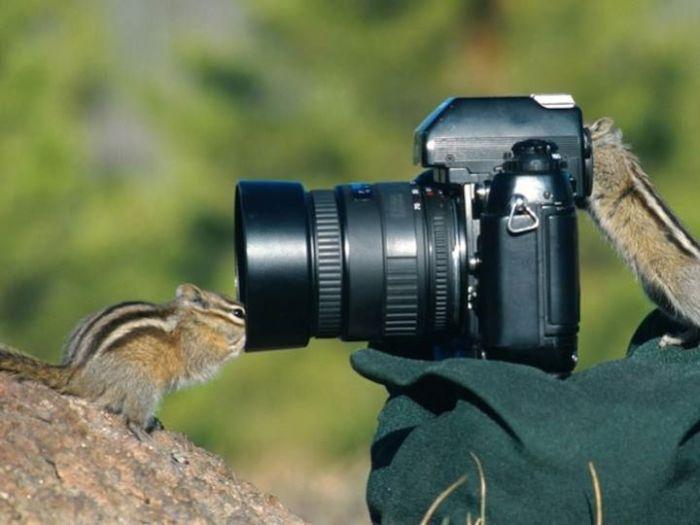fotografía de naturaleza