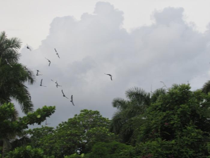 vuelan las palomas en el parque de las esculturas