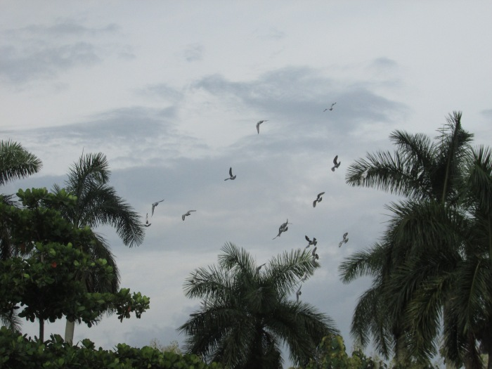 el vuelo de las palomas en parque de las esculturas en Pinar del Río