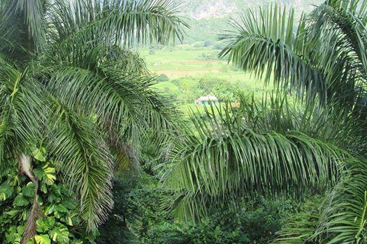 Valle de Viñales. Pinar del Río