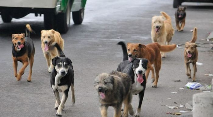 perros callejeros, hasta cuándo la indolencia con estos animales